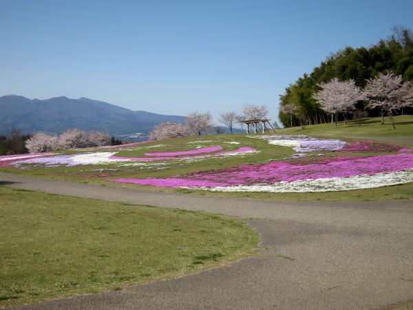 散歩-3.JPG