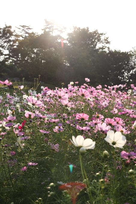 昭和記念公園0008.JPG