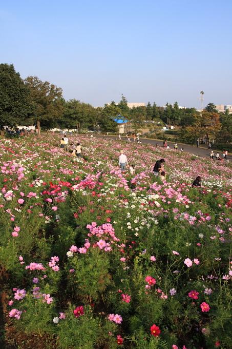 昭和記念公園0010.JPG