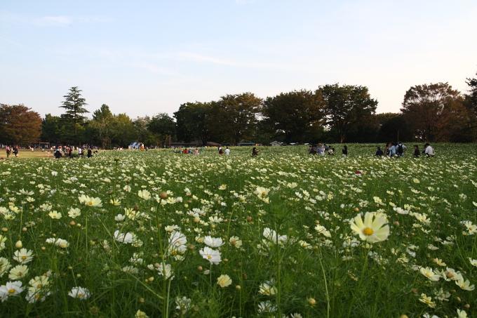 昭和記念公園0012.JPG