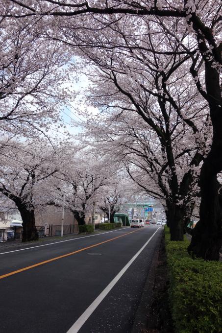 桜0004.JPG
