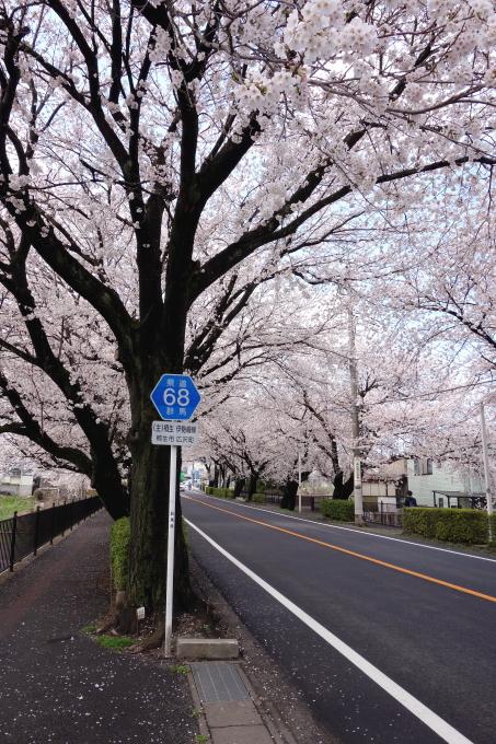 桜0002.JPG