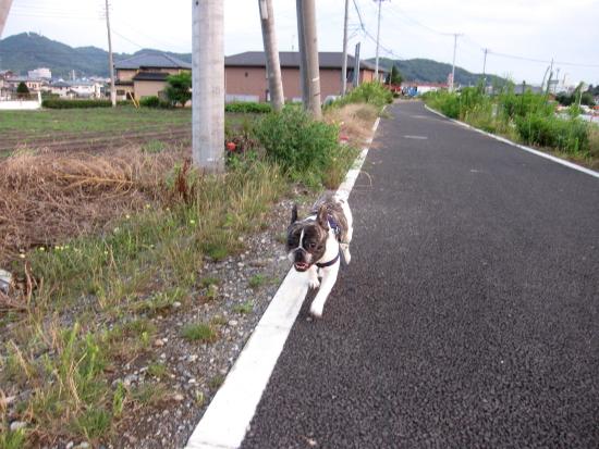 虎次郎0001.JPG